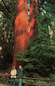 Postcard Muir Woods National Monument Mill Valley California