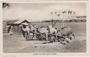 RP: Camel Water Carts , Aden , Yemen , 30-40s