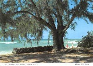 Grand Cayman Islands Post card Old Vintage Antique Postcard The Casuerina Tre...