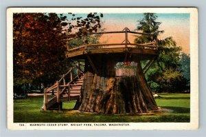 Tacoma WA-Washington, Mammoth Cedar Stump, Wright Park, Vintage Postcard