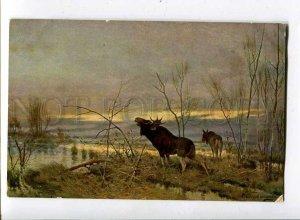 261159 RUSSIA Tikhmenev Moose HUNT Richard #649 Vintage PC