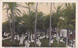 Florida Palm Beach Enjoying Life Under Coc\anut Trees And Tropical Park Grounds