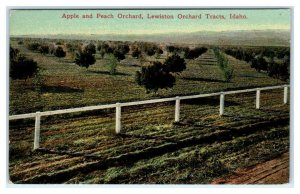 LEWISTON ORCHARD TRACT, Idaho ID ~ APPLE & PEACH TREES Nez Perce County Postcard