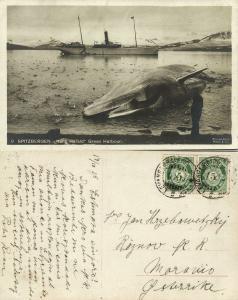 norway, SPITSBERGEN SVALBARD, Green Harbour, Steamer Kong Harald, Whale (1915)