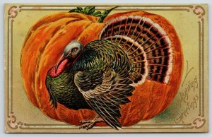 Thanksgiving~Full Fan Turkey Hides In Front of Huge Pumpkin~Embossed~IPCC 1907