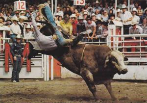 The Brahma Bull Riding event,  Calgary Exhibition and Stampede, Calgary, Albe...
