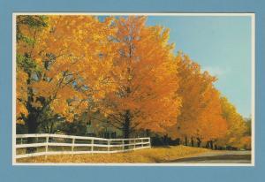 Fall Trees Scenery White Mountains New Hampshire Postcard