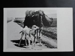 A Young Camel A YOUNGSTER IN THE DESERT - Old Postcard by Missionary Film Cmte