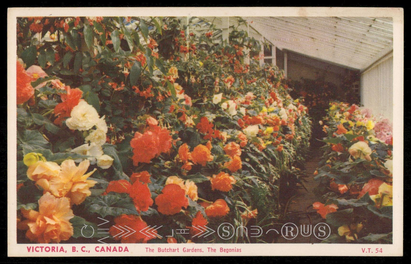 The Butchart Gardens - The Begonias / HipPostcard