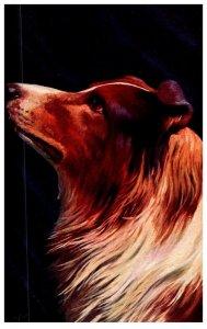 Dog  ,Collie