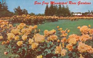 California San Jose Municipal Rose Gardens