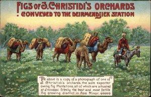 Figs J Christidi Orchards Camels Asia Minor Inovassi Erbeily c1910 Postcard