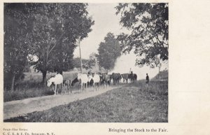 SYRACUSE , New York , 00-10s ; Bringing the Stock to the Fair