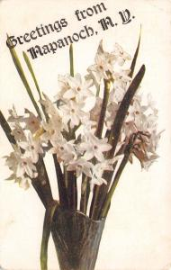 Napanoch New York~White Daffodil Flower Pot Greetings~1912 Postcard