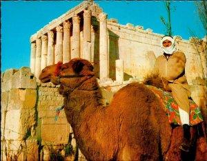 CI01322 lebanon baalbeck bacchus temple camel bedouin types ethnics archeology