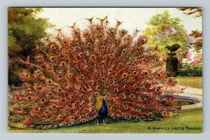 Warwick, UK-United Kingdom, Warwick Castle Peacock, Vintage Postcard