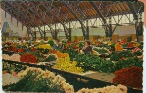 Netherlands Aalsmeer Interieur bloemenveiling - unposted