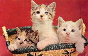 Three Happy Kittens Cat Postal Used Unknown