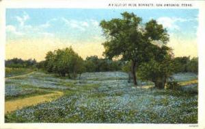 Bluebonnets, State Flower San Antonio TX Unused