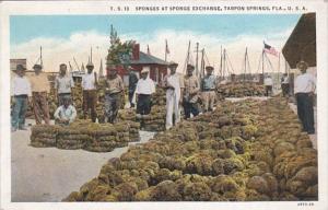 Florida Tarpon Springs Sponges At The Sponge Exchange Curteich