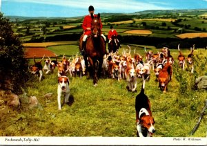 Ireland Fox Hunt Foxhounds Tally Ho!