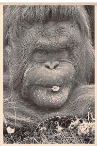 Wild Animals, Fauna: Flower Power, Monkey, Ape