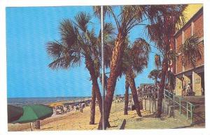 Palms Swaying Gently In The Ocean Breeze In Front Of The Pavilion, Myrtle Bea...