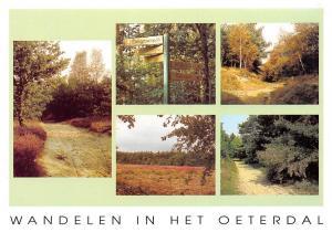 Belgium Wandelen in Het Oeterdal, Heideweg Wandelwegen Berkenherfst Landscape