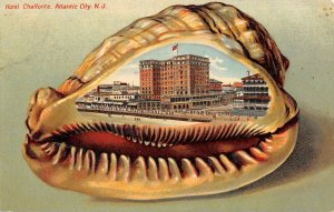 LP55 Atlantic City New Jersey N. J. Postcard Shell Border Hotel Chalfonte