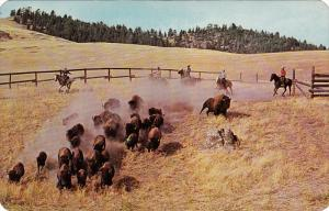 National Bison Range, MOIESE, Montana, 40-60s