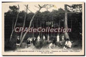 Postcard Old Saint Brevin I'Ocean Le Bois Des Lutins