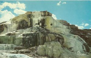 MINERVA TERRACE MAMMOTH YELLOWSTONE PARK Postcard MONTANA
