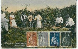 02403 ETHNIC vintage postcard: PORTUGAL - MADEIRA