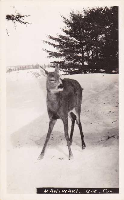 RPPC Young Deer - Maniwaki QC, Quebec, Canada