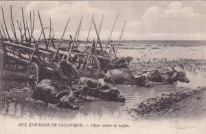 AUX ENVIRONS DE SALONIQUE, Chars atteles de buffles, Greece, 00-10s