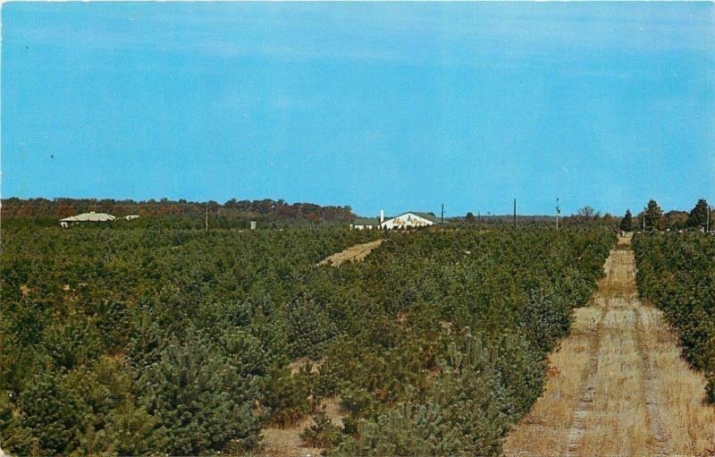 Bristol Indiana~Eby's Pines~Christmas Tree Farm~1960 Postcard ...