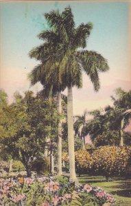 Majestic Royal Palms In Florida Albertype