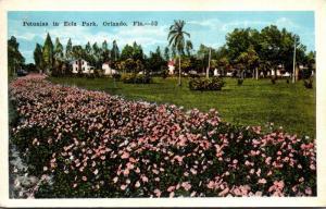 Florida Orlando Petunia In Eola Park 1922