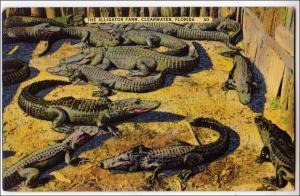 Alligator Farm in Florida