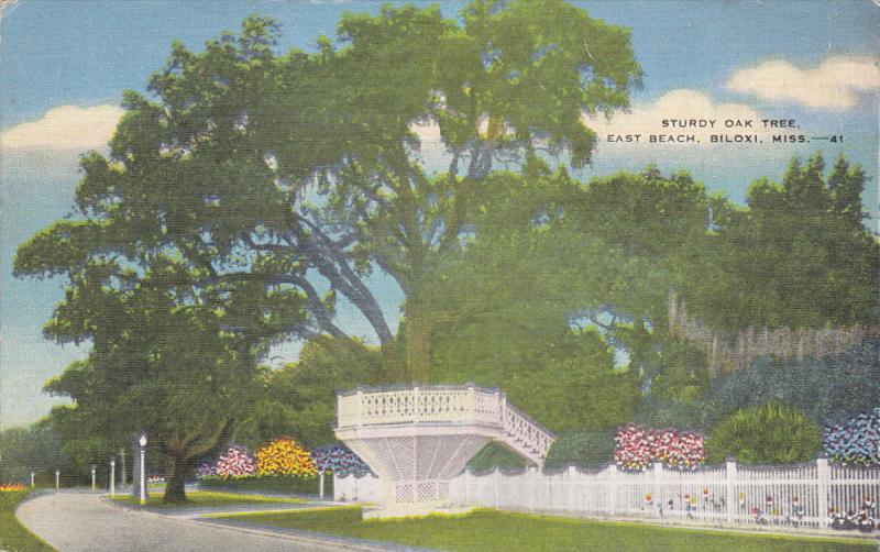 Sturdy Oak Tree , East Beach , BILOXI , Mississippi , 1930-40s