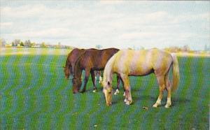 Horses In Pasture Greetings From Caledonia New York
