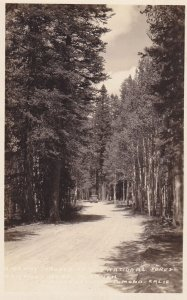 RP: Roadway in National Forest , POMONA , California , 20-40s