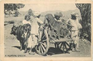 A Hunting Cheeta India