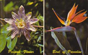 Passion Flower and Bird Of Paradise Florida Tropical Plants