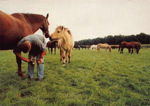 Nationaal Rusthuis Voor Paarden Horses Chevaux Postcard