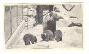 European Brown Bear & Young, U.S. National Zoological Park, Washington, D.C.,...