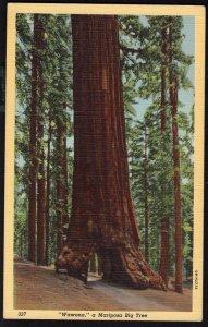 California WAWONA Tunnel Tree Mariposa Big Tree Yosemite Valley LINEN