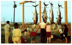 6268   RI Point Judith  Giant Bluefin Tuna Toutnament