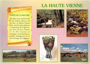 B51960 La Haute Vienne cow vaches sheep moutons france