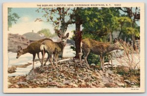 Adirondack Mountains New York~Deer Spot Photographer~Snowy Rocks~1935 Linen PC